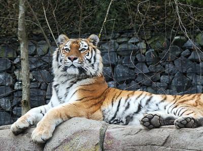 Zoo Zürich 2018-01