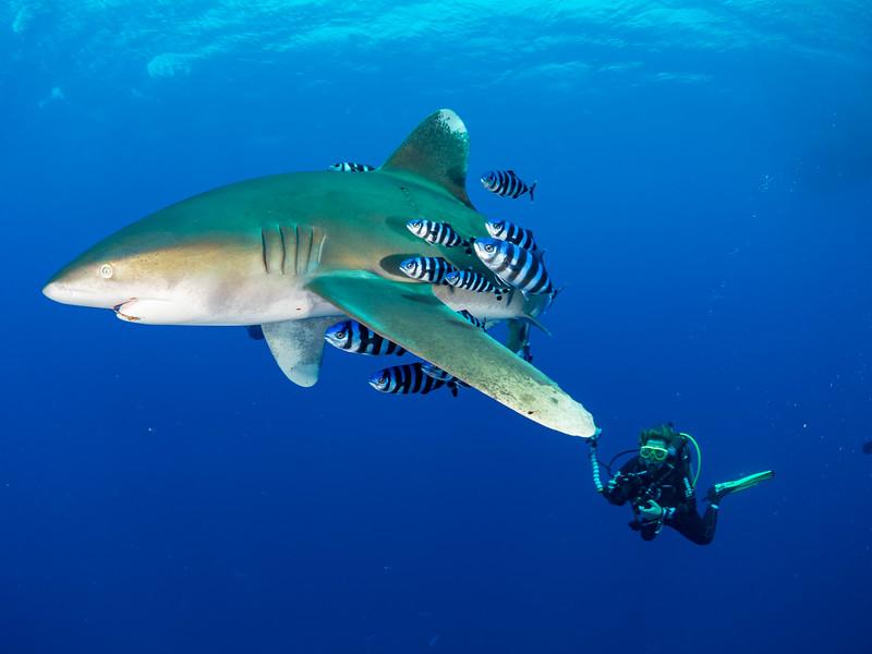 SharkQuest_29Jun18_0382.jpg