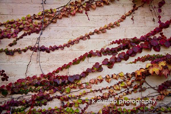 weeds & vines