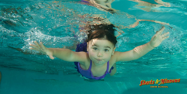 8-2015 Shark Pool