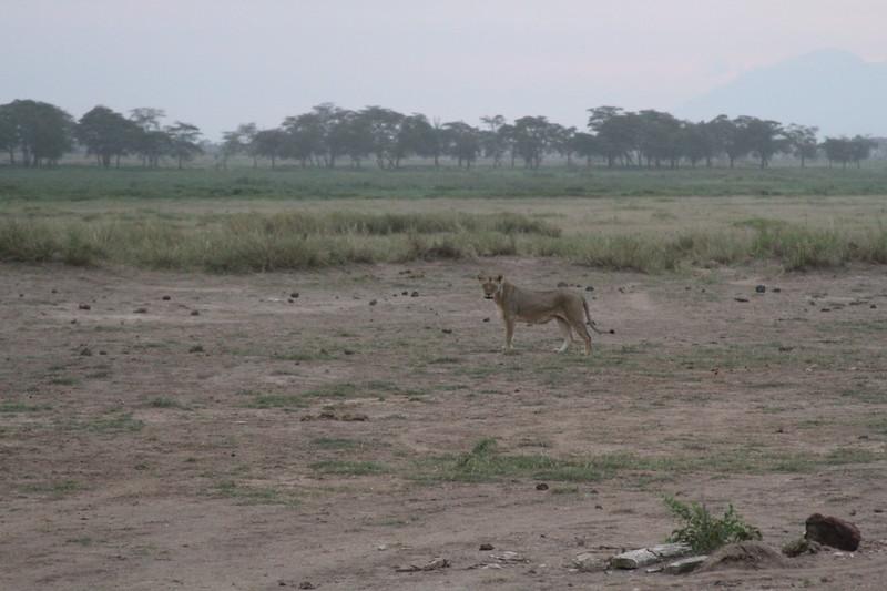 Kenya 2019 #2 1686.JPG