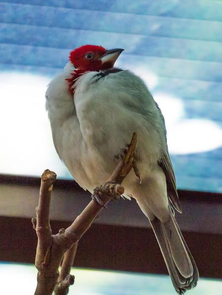 Bird at London Zoo