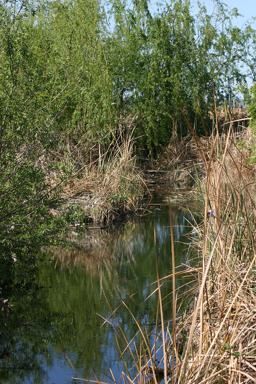 . The wetlands. (Joan Morris/Mercury News)