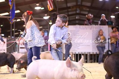 Market Hog Showmanship