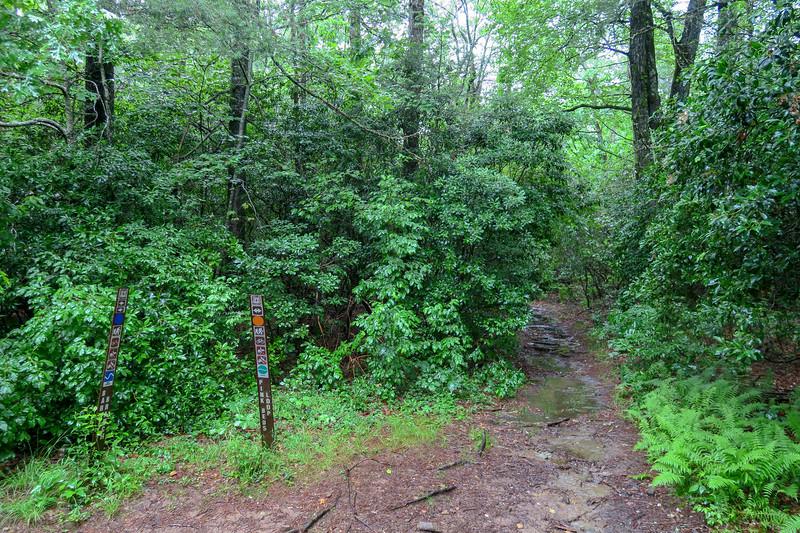 Pink Beds Loop-Barnett Branch Trail Junction -- 3,210'