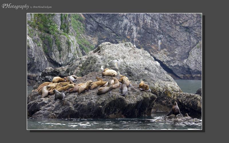 My Alaska 12-08-095.jpg