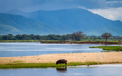 Mana Pools NP Zimbabwe