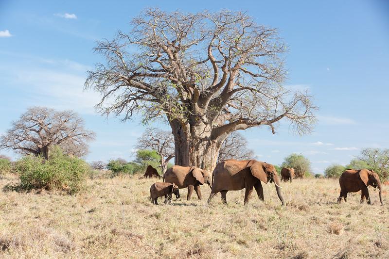 Africa - 102016 - 7920.jpg