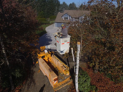 Tree Removal 2019