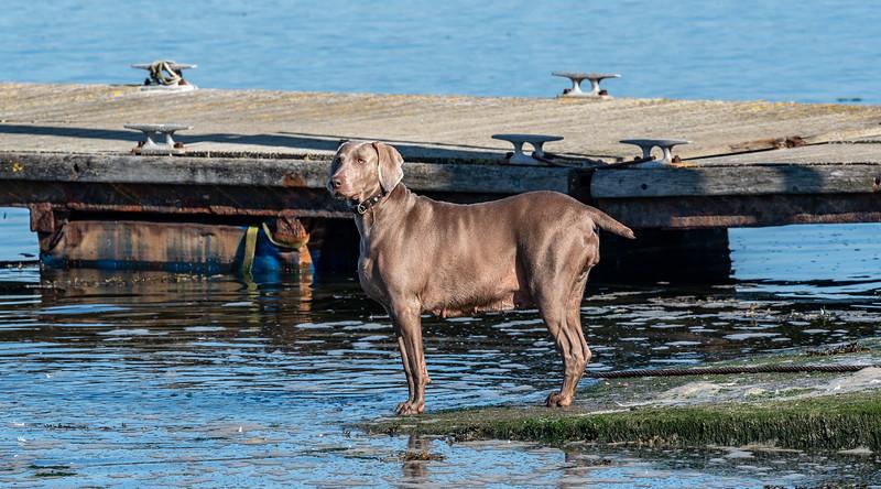 Canine-5.jpg