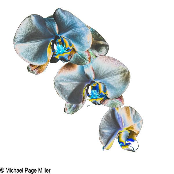 Orchid B 18-02-09-2-2.jpg