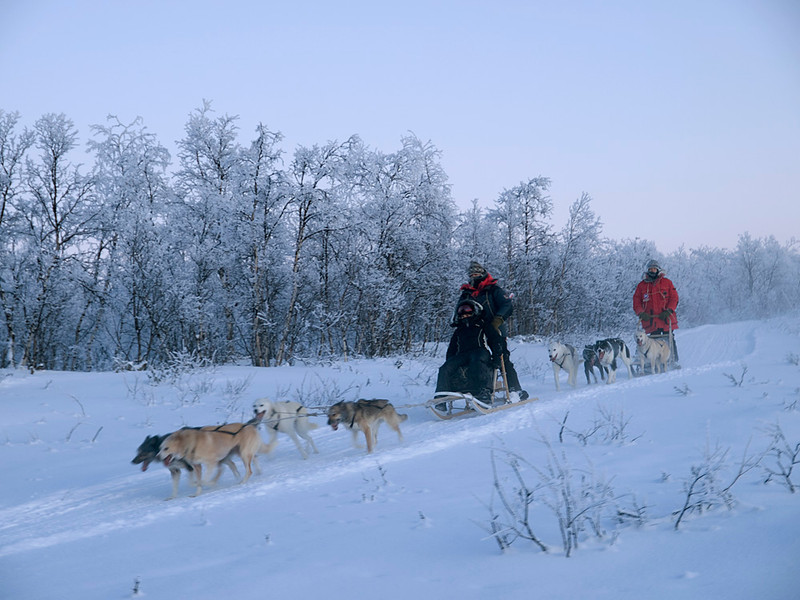 The group on the dog sleds making way back to camp.
