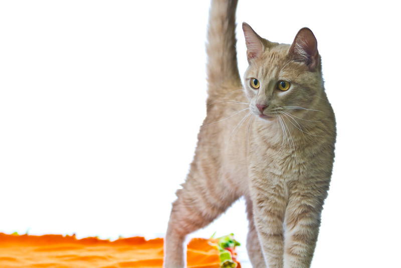 1202_Cats_245.jpg