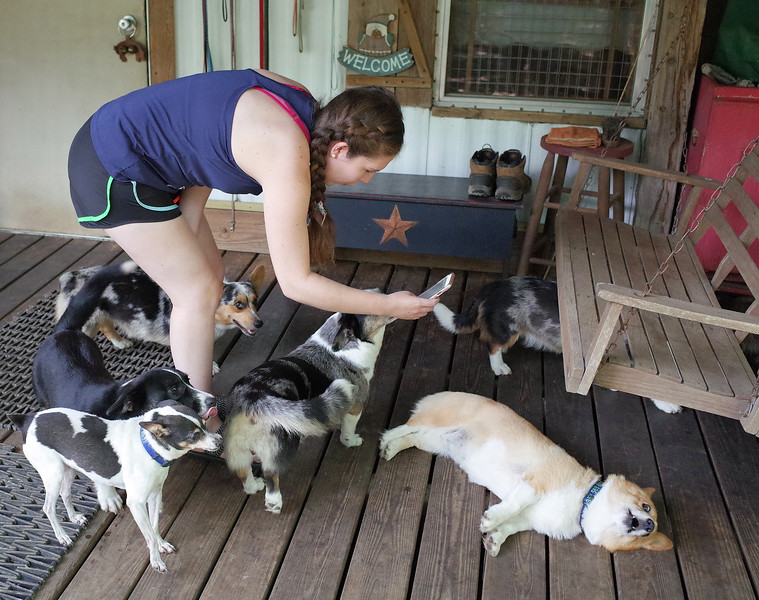 A Day with The Corgi Lady - June 20, 2016