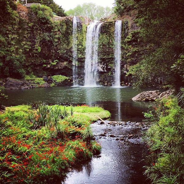 A Garden-of-Eden moment in Northland, Whangarei Falls #newzealand #dna2nz #gadv