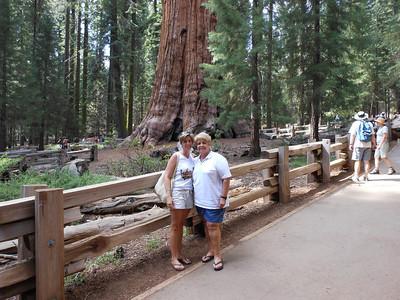 California 2011 - Sequoia National Park