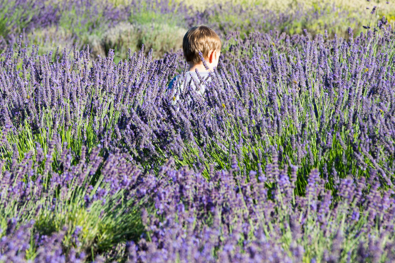 Evergreen Lavender Farm-53.JPG