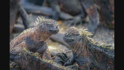 Galapagos Islands - July 2021