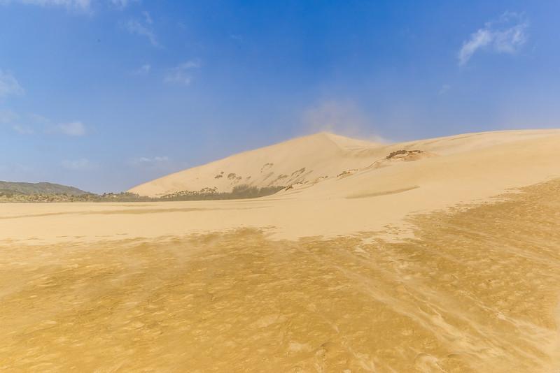 Mitten im Sandsturm