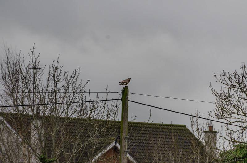 Birds 270118-4.jpg