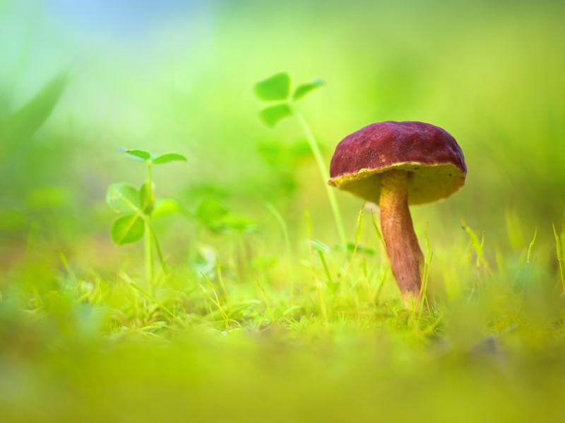 Fairyland..