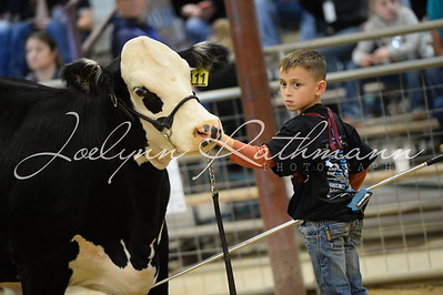 Buckle Showmanship - 9 and Under