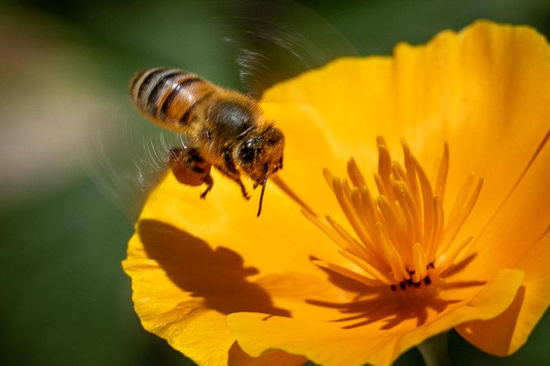 August 26 - Bee.jpg