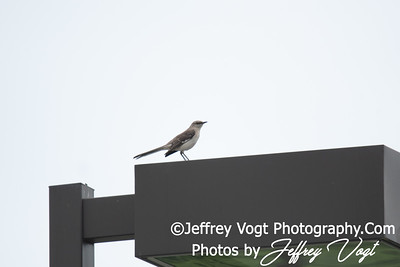06/02/2018 Kings Farm Park, Nature and Wildlife Photos, Rockville Maryland, Photography by Jeffrey Vogt