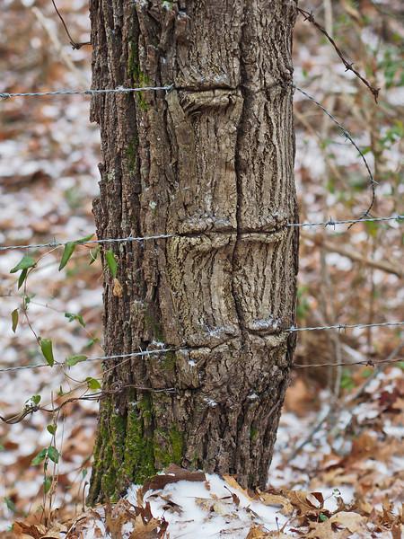 barbedtree.jpg