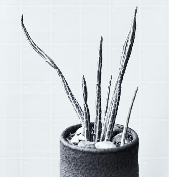 succulent in a pot 061220-.jpg