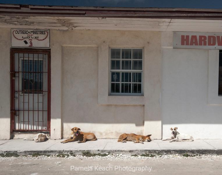 Dogs (1 of 1).jpg