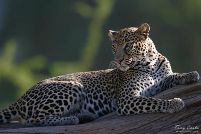 2005 Kenya