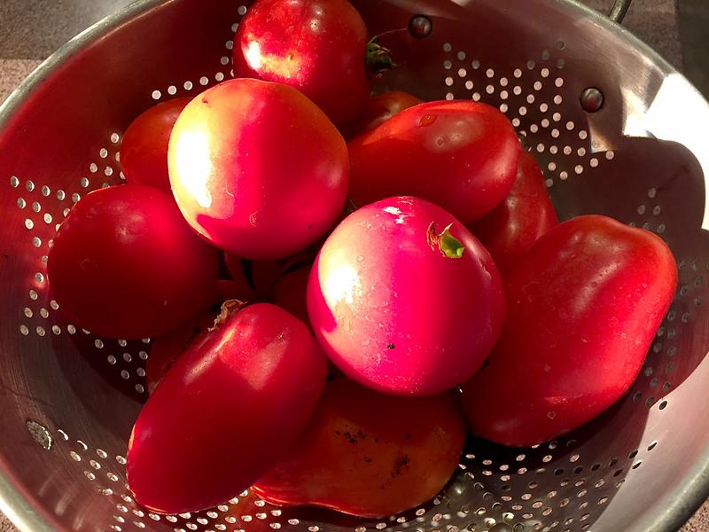 garden tomatos.jpg