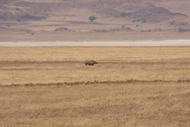 Our black rhinoceros sighting! From very far away (at least a half a mile away)!