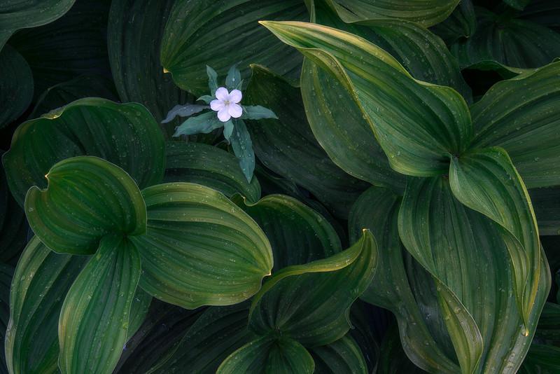 """""""Botanical"""""""