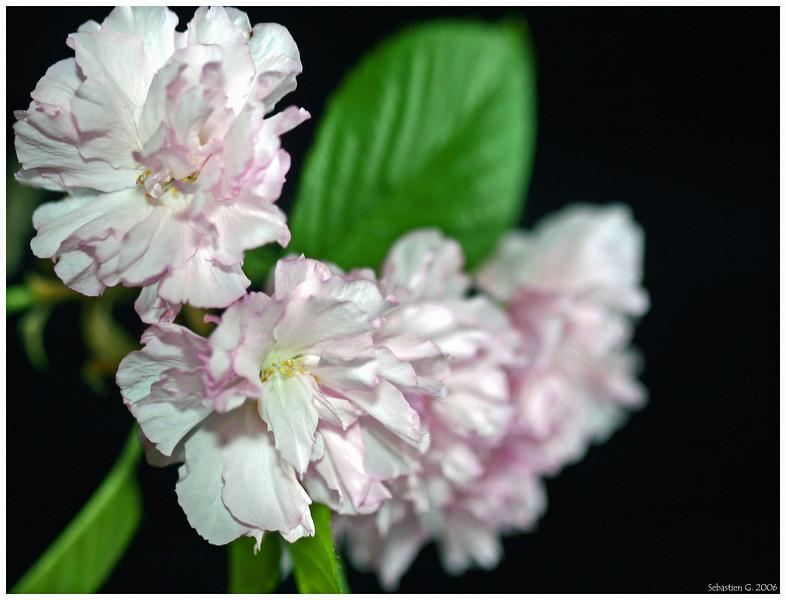 Orchid20_082209.jpg