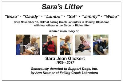 Sara's Litter
