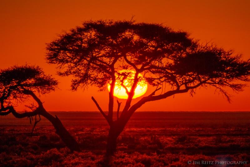 Sunrise on the flat plains of Etosha National Park, Namibia.