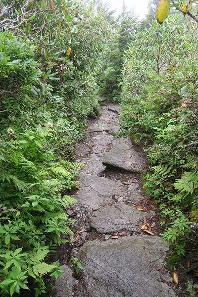 Grandfather Trail -- 5,860'