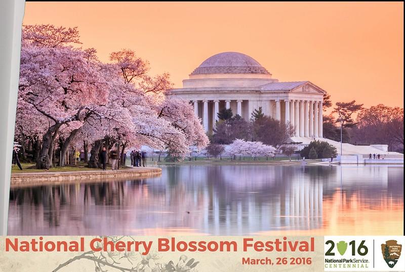 Boothie-NPS-CherryBlossom- (195).jpg