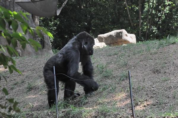 Zoo Atlanta 2014 in Color
