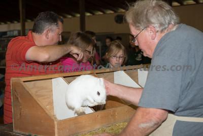 July 15 Rabbit Judging