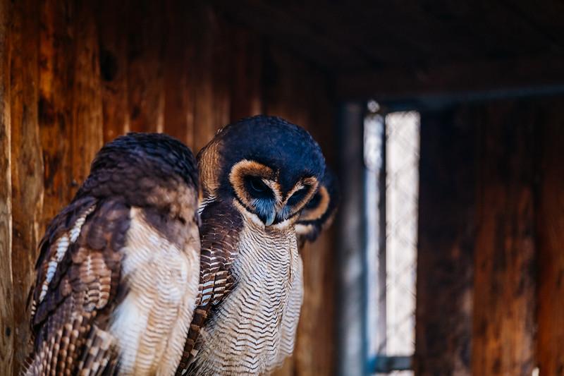 Tonis Zoo-0392.jpg