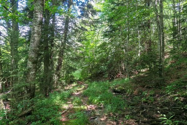 Buckeye Gap Trail (#126)