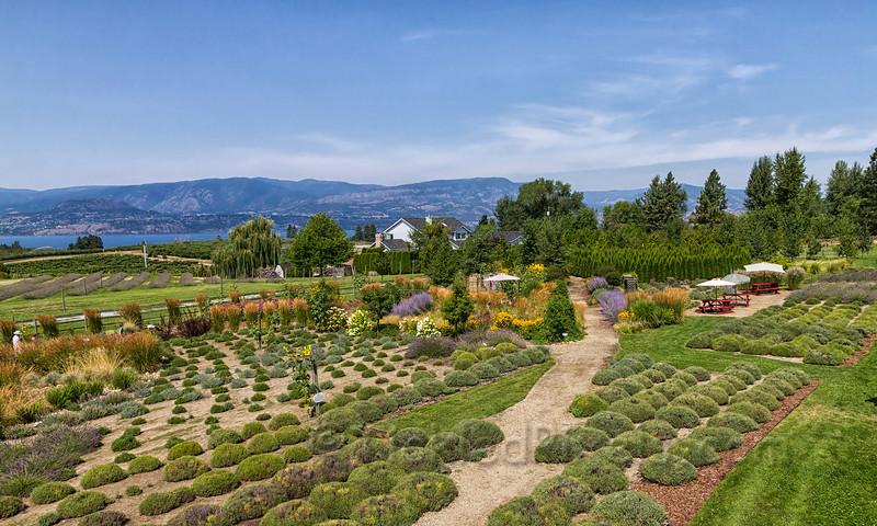 Okanagan Lavender and Herb Farm