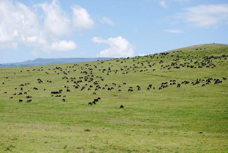 Ngorongoro (163).JPG