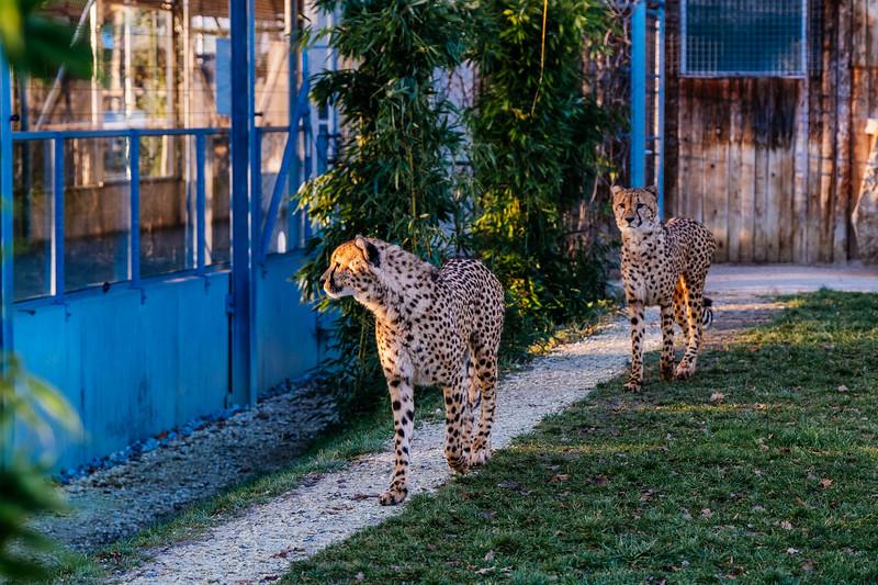 Tonis Zoo-0228.jpg