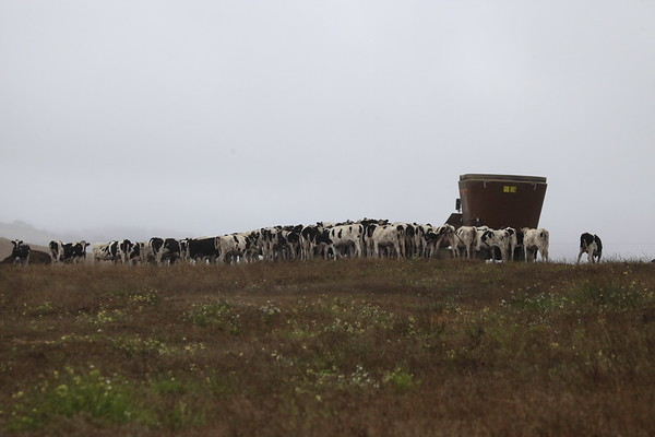 Kehoe Ranch - Historic J Ranch PRNS