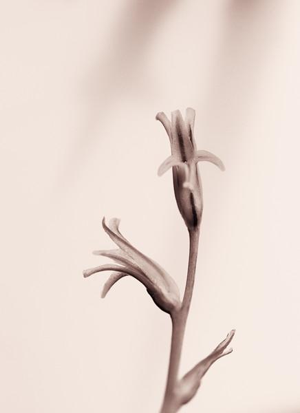 succulent flower 041020-2.jpg