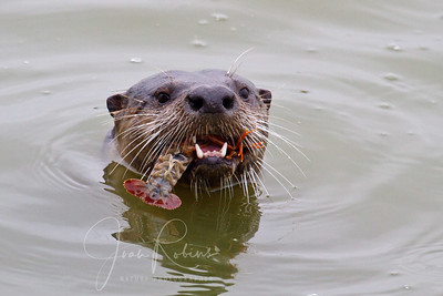 Otter day at the Ponds!